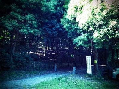 ni-haru woods.JPG